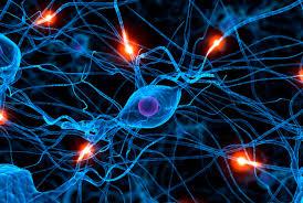 la fotoneuralprolo